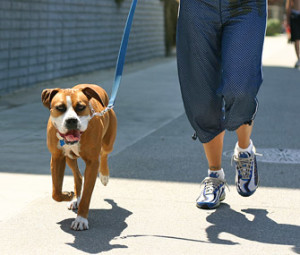 Dog on lead running with woman